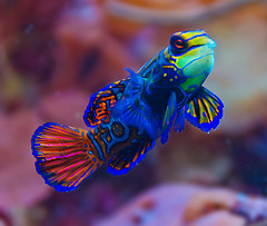 cold water versus tropical fish 5 things to think about