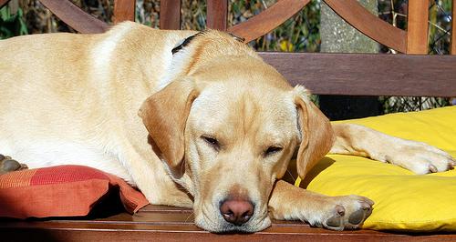Does Your Dog Have Harvest Mites
