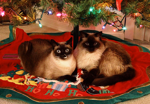 Christmas Present Ideas For Cats