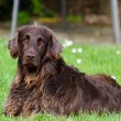Symptoms of Osteoarthritis in Dogs