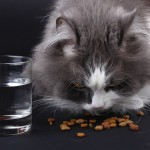 How Much Food Should I Feed My Cat?