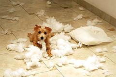 Bad Doggy