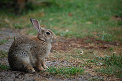 Things harmful to rabbits