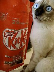 Kit Cat?