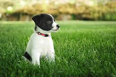 First Puppy
