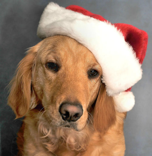 Tips on Keeping Your Pets Calm During the Festive Season