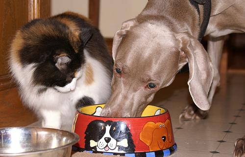 Dog Should Not Steal Food