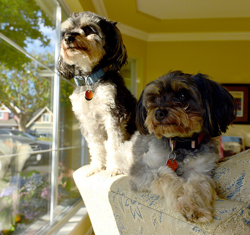 Haus Sitting: Doggie House Sitting