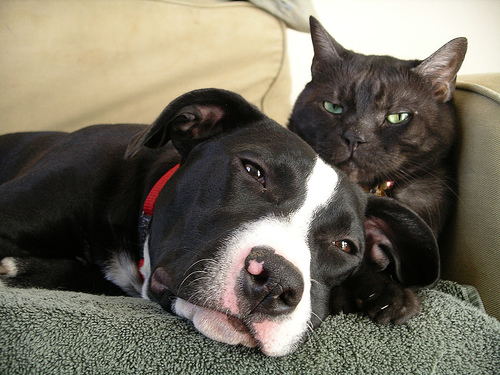 Skin Problems In Cats And Dogs