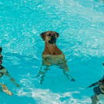 Top tips for keeping pets cool this summer