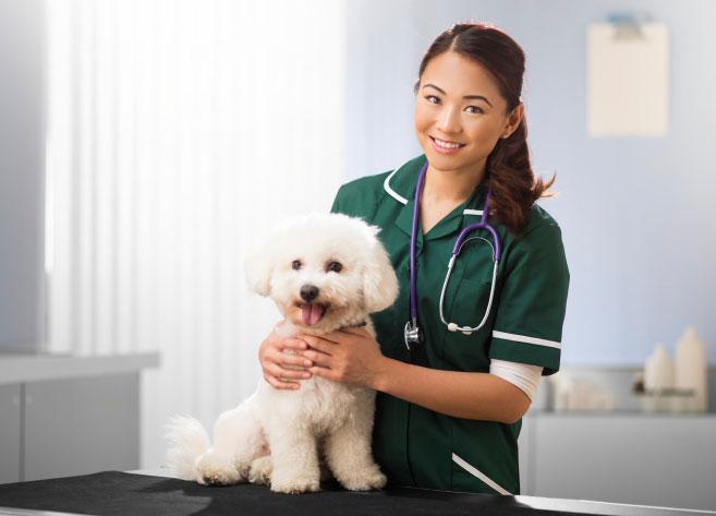 Pyometra In Dogs Uk