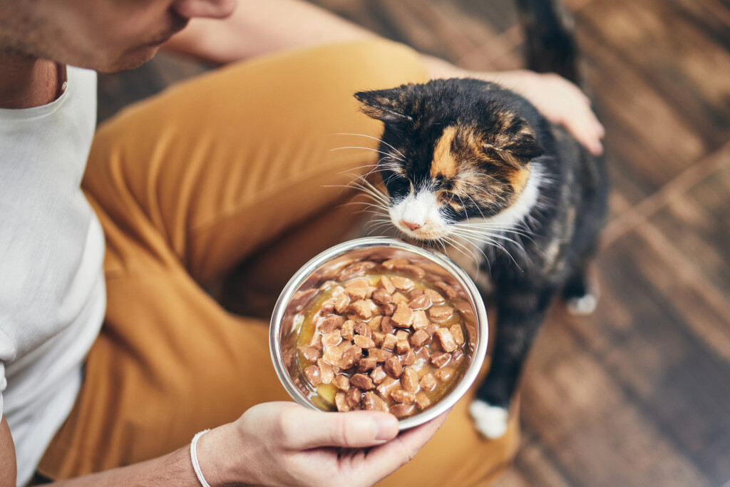 Why are cats fussy eaters?
