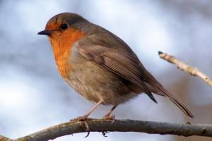 Feeding Wild Birds - 3 top tips!
