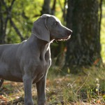 What is Alabama Rot and how can it affect your dog?