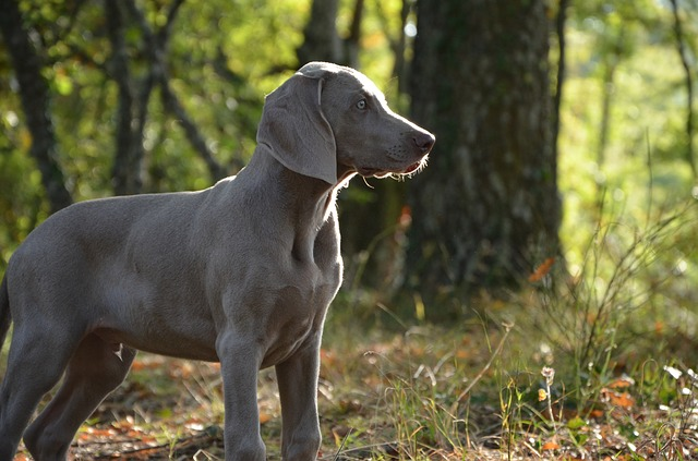 Alabama Rot in the UK
