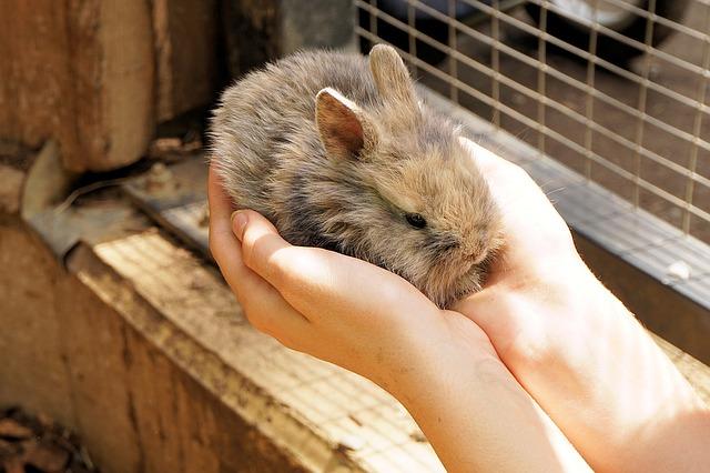 Why Rabbits Shouldn't Eat Rabbit Food