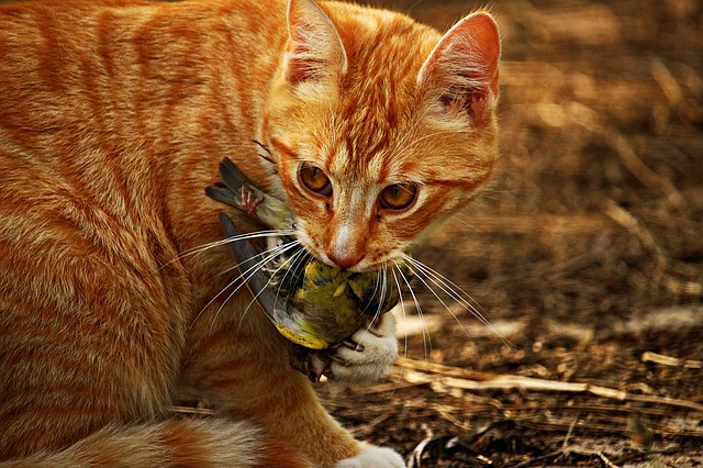 How To Stop My Cat Bringing Home Dead Birds