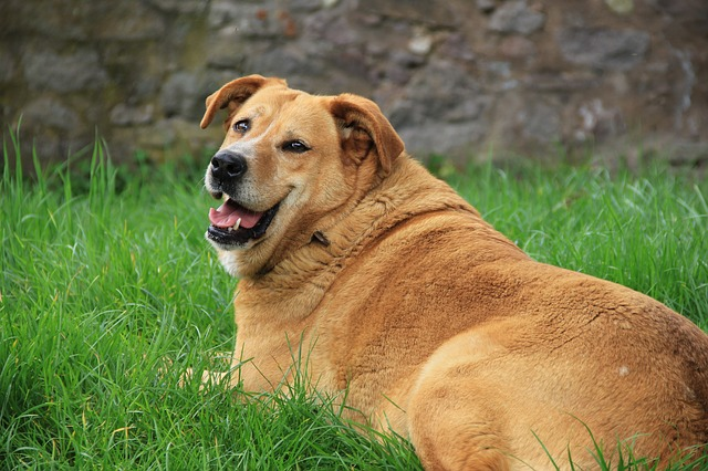 Dog Obesity 5 Ways To Combat It