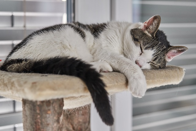 How Long Should Cats Sleep For?