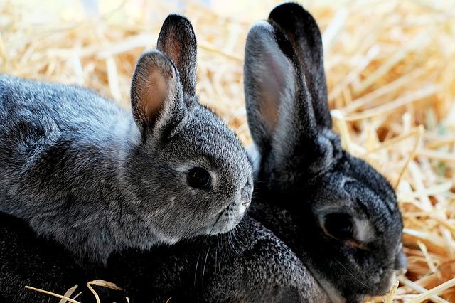 Looking After Your Rabbit- Rabbit Awareness Week
