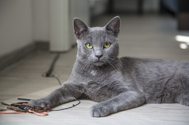 How to Keep Indoor Cats Happy and Healthy