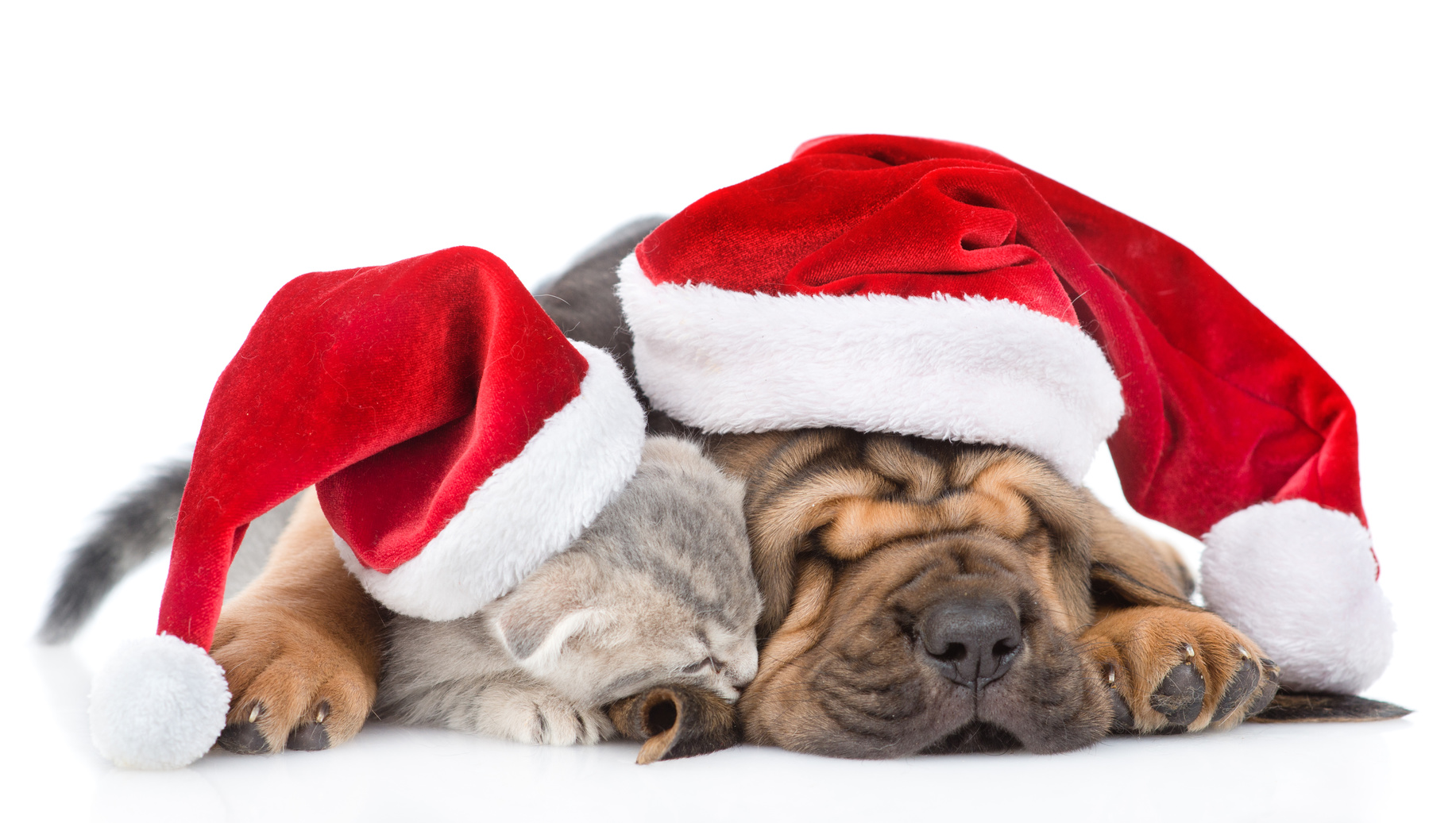 Merry Christmas Puppies.10 Ways To Have A Merry Christmas With Pets