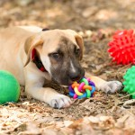 Great Toys for Pets