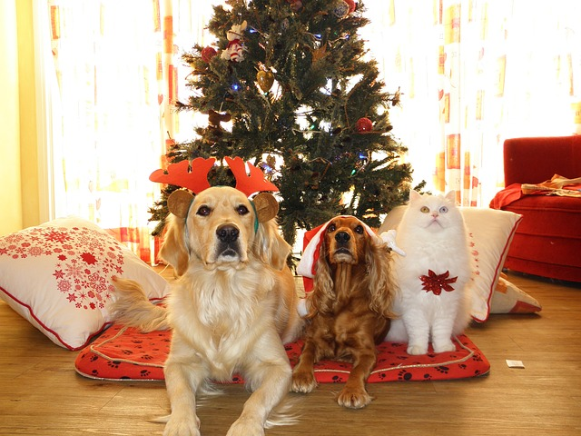 Xmas gifts for dogs uk