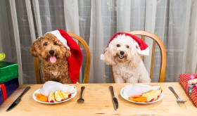 Foods your pet should avoid at Christmas