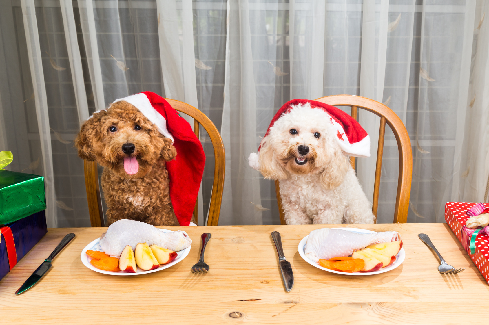 Foods Your Pet (cat and dog) Should Avoid This Christmas
