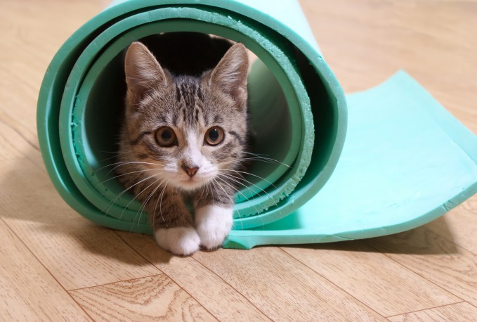 Top Tips for New Kitten Owners