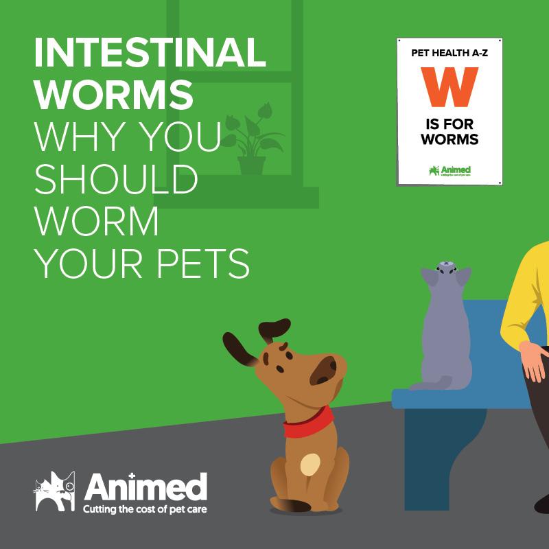 Intestinal worms blog image
