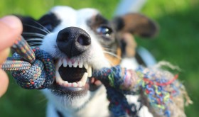 Top dental care tips for cats and dogs