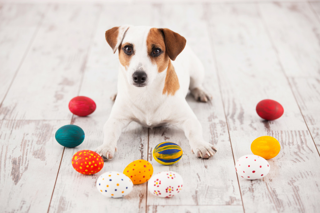 Dog with painted Easter Eggs