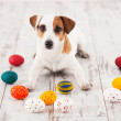 Why chocolate can be dangerous for dogs