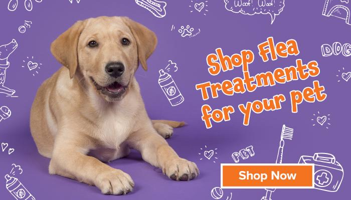 Shop flea treatments