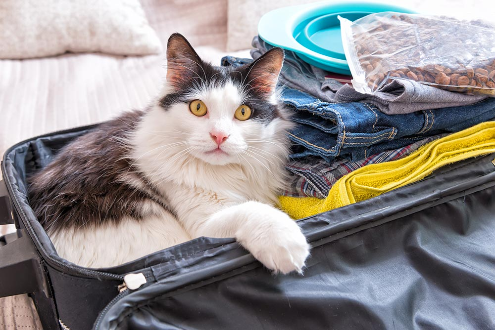 Cat sitting in packed suitcase