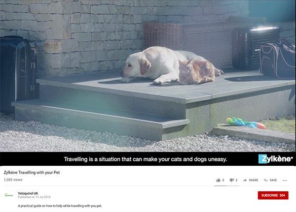 Zylkene Youtube Video