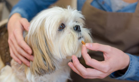 How can you help your dog's sensitive stomach?