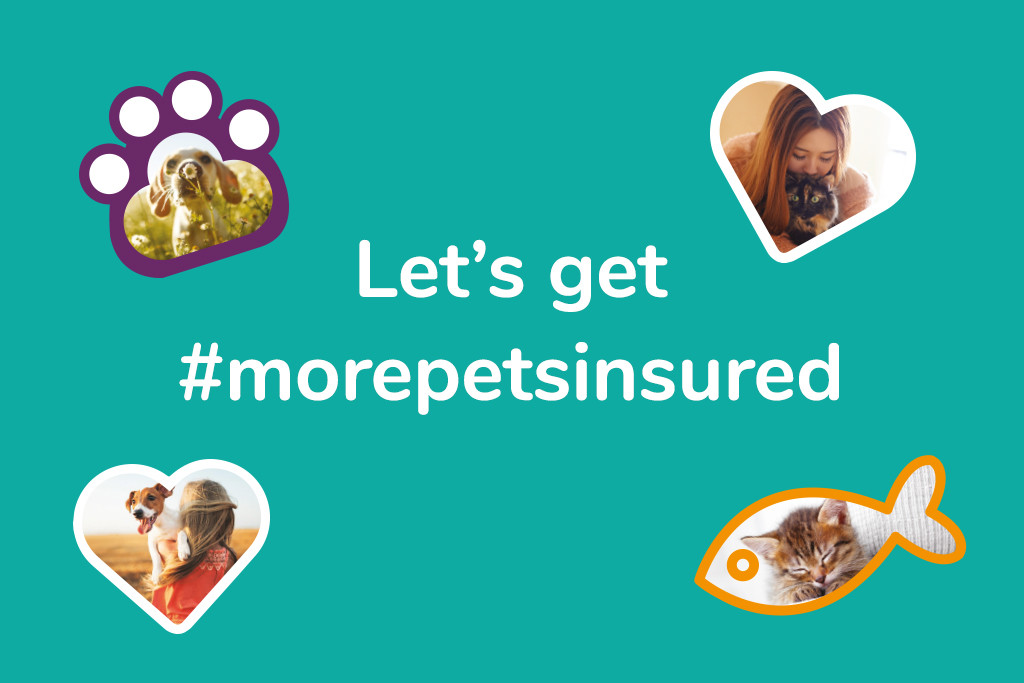 blog header morepetsinsured_MiPet Cover_1024x683 (July 2019)