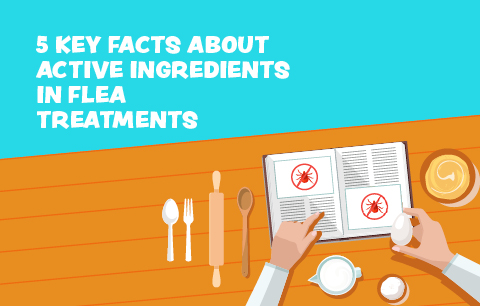 5 Facts about active ingredients in flea treatments