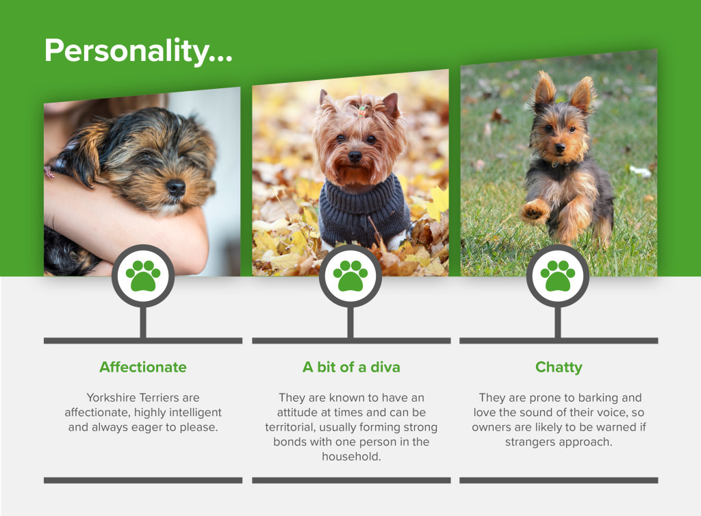 Yorkshire Terrier_Personality