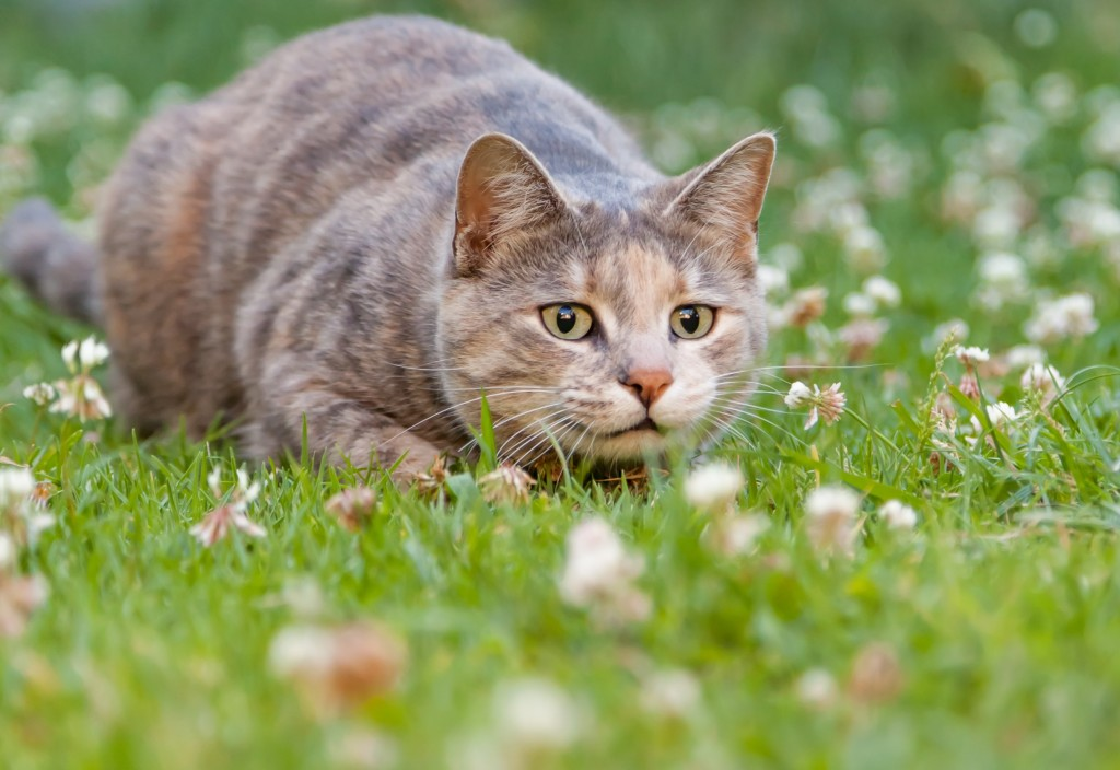 How can I stop my cat from hunting?