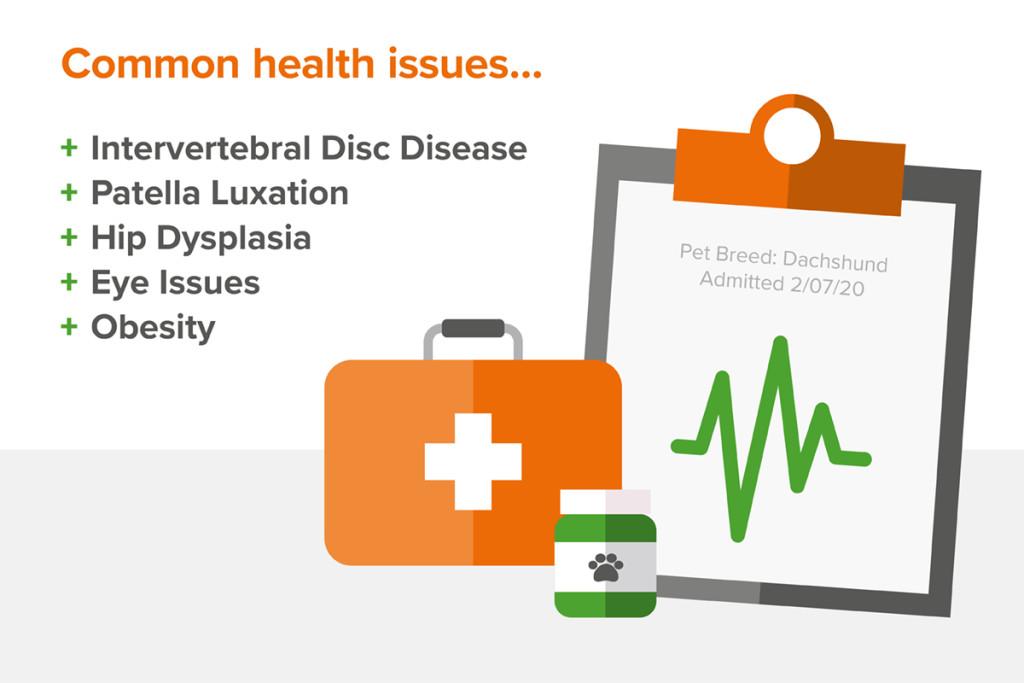 Dachshund Health Issues