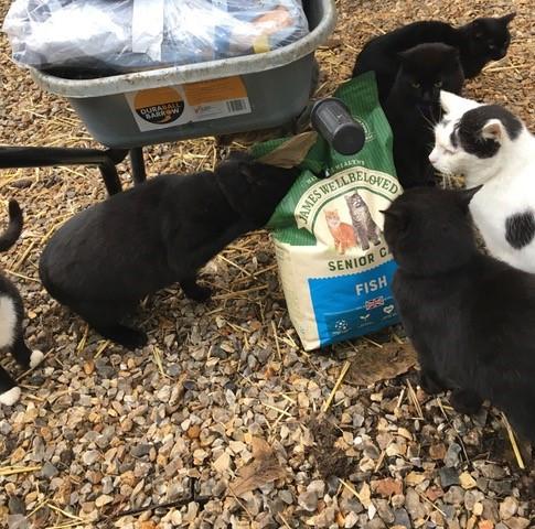 Animed Direct donates food to local animal charities