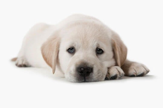 Calming solutions for your puppy