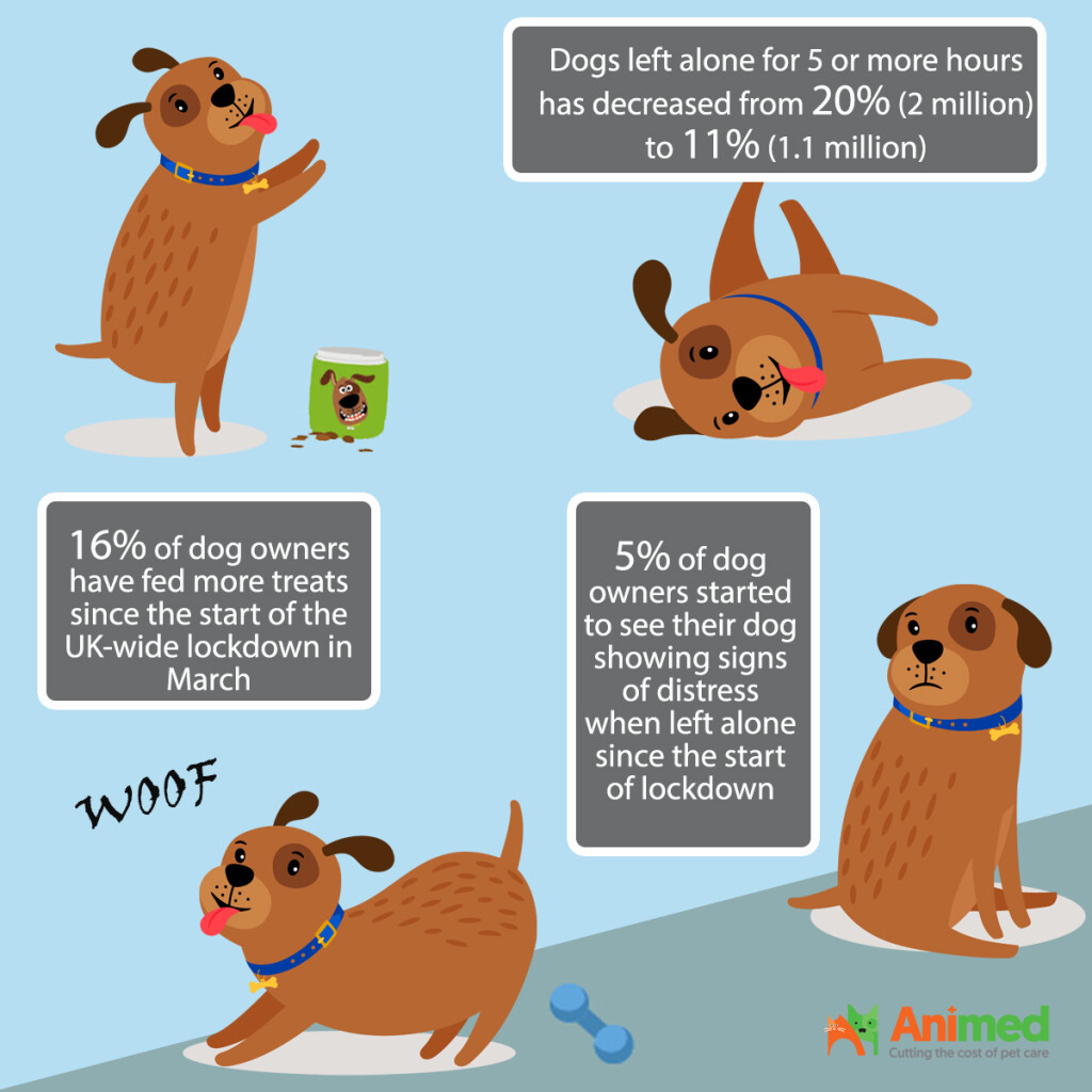 the-impact-of-covid19-on-dogs-statistics