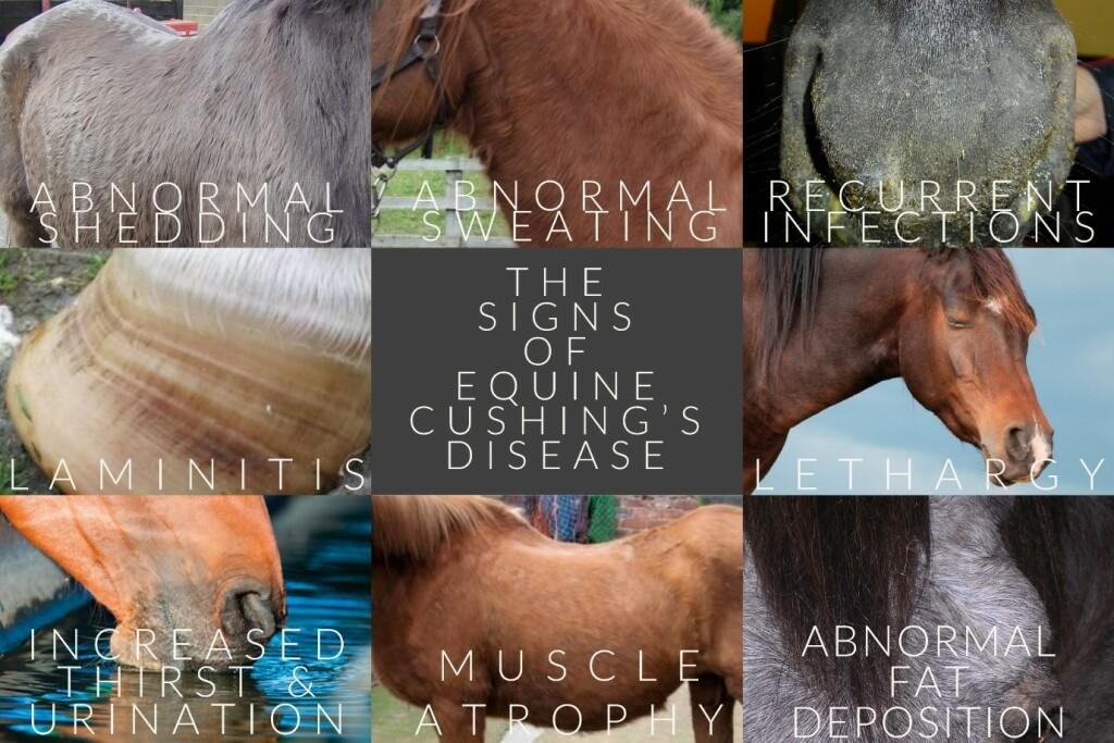 The signs of cushings disease