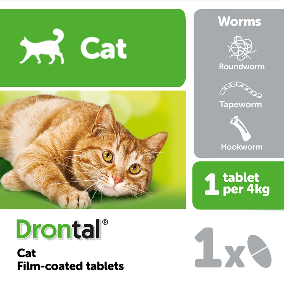 Causes of Foul Smelling Faeces in Kittens - Animed Direct