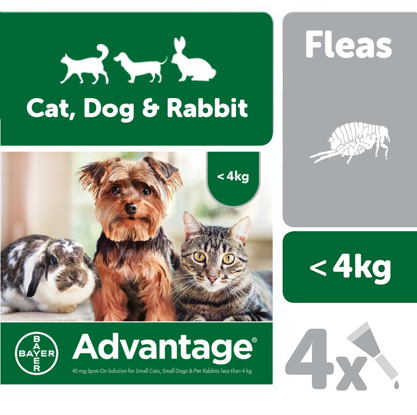 Advantage 40 for Small Cats, Small Dogs, Pet Rabbits (under 4kg) - Pack of 4 Pipettes on Animed Direct